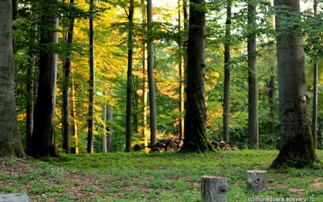 Pădure Hundeoara
