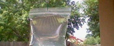 Metoda care te scapa definitiv de țânțari! Ai nevoie doar de o pungă cu apă și câteva monede